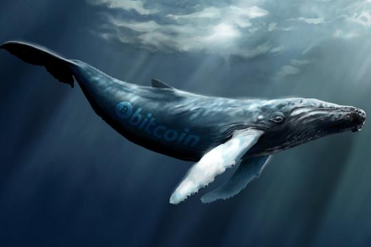 نهنگ های بیتکوین