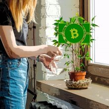 """افزایش مشتری برای ارز رمزنگاری شده """"بیت کوین کش"""" با شروع فصل بهار"""
