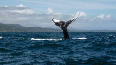 نهنگ بیت کوین دارایی های خود را به صرافی هیوبی منتقل کرد