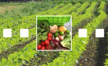 بلاک چین و انقلابی عظیم در صنعت کشاورزی و مواد غذایی آینده