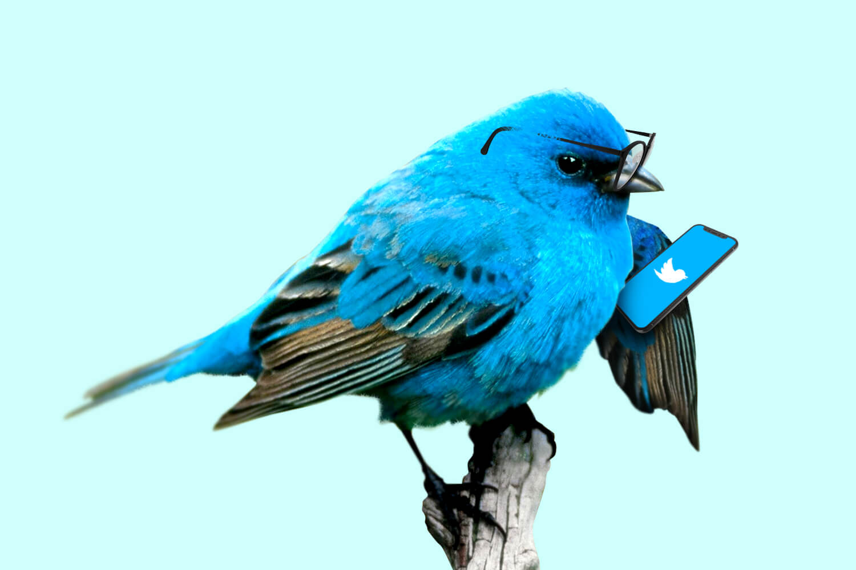 پس از فشار برای عدم تمرکز، API جدید توییتر در اختیار برنامهنویسان