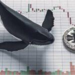 نهنگهای - کوین ایران